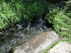 2011.8.29.湧水公園2.JPG