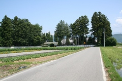 飯田地区屋敷林.JPG