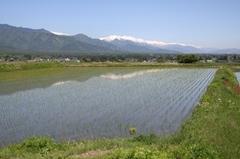 田舎1.JPG